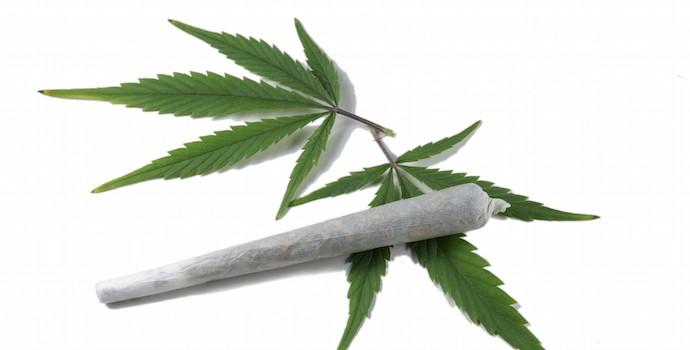 Cannabis, drogue Professeur Joyeux
